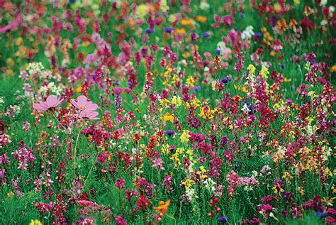 wildflower backyard 15 best minnesota wildflower gardens designs wild flower