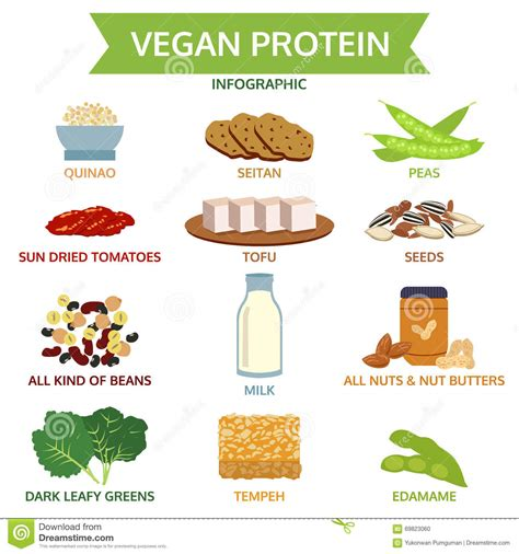 regime alimentare vegetariano gr 225 fico da informa 231 227 o da prote 237 na do vegetariano vetor do