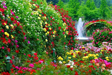 wallpaper flower garden flower garden backgrounds 48 wallpapers adorable
