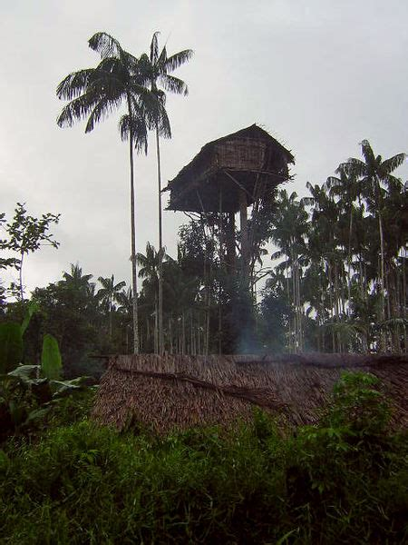 korowai treehouse quot the existence of our environment quot quot a mysterious