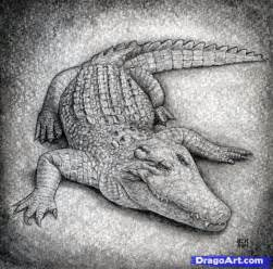 How to draw a crocodile step by step safari animals animals free