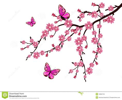 cherry blossom stock illustration illustration of nature