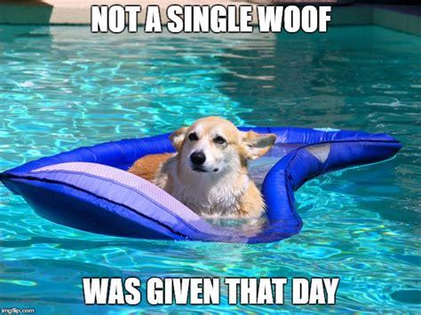 Pool Boy Meme - 10 corgi memes that will make you laugh what every dog