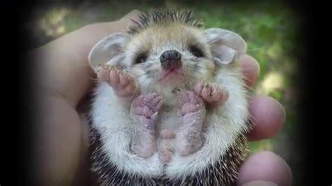 imagenes impresionantes de ataques de animales impresionantes animales beb 233 s tienes que verlo youtube