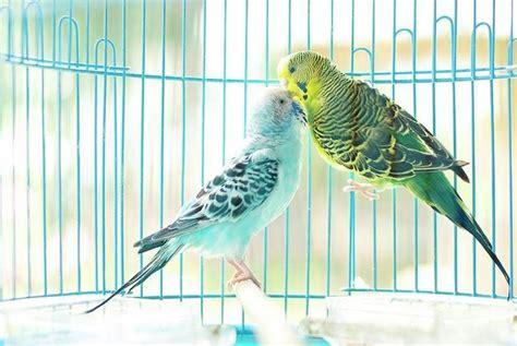 gabbie per cocorite prezzo gabbie per cocorite uccelli esotici voliere per le