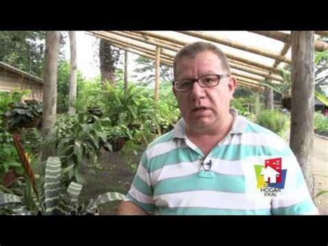 programa hogar youtube entrevista sobre las bromelias parte 2 programa tu hogar