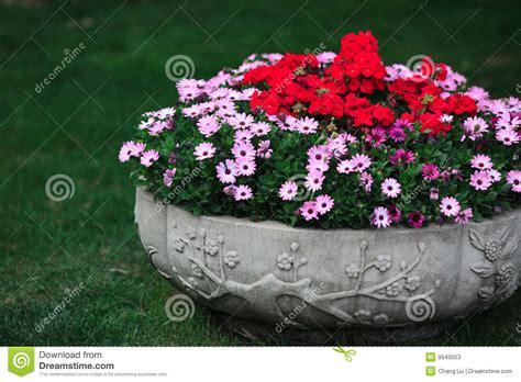 ciotole per fiori ciotola dei fiori fotografie stock immagine 9549053