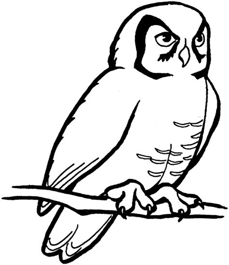 clipart black and white owl clipart black and white clipartion com