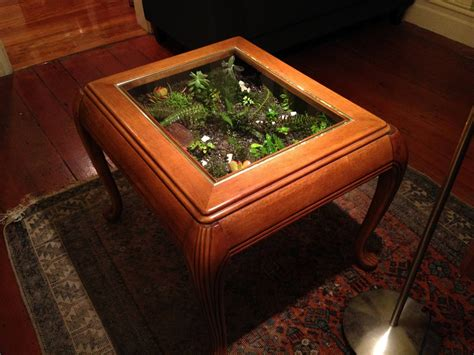 the fern and mossery coffee table terrarium