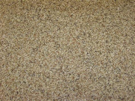 carpet reviews frieze carpet reviews floor matttroy