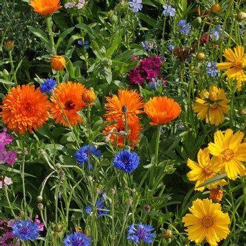 Pre Seeded Flower Mats by Bird Attracting Seed Mat 6pk