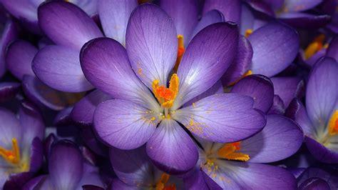 blooms hd wallpapers flowers wallpapers hd hd 1080p hd wallpapers