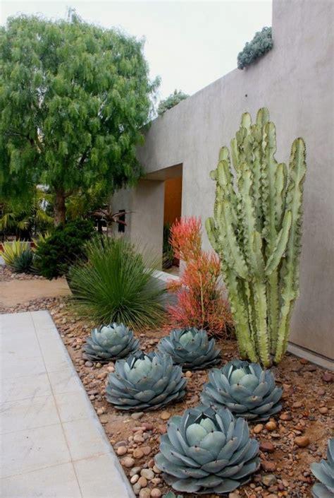 cacti  outdoor decor outdoorthemecom