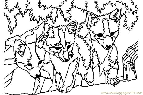 coloring pages three fox mammals gt fox free printable