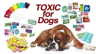 xylitol dogs xylitol toxic for dogs