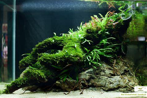 aquarium duenger pflanzenpflege pflege garnelen