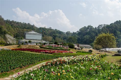 Queen Sirikit Botanic Garden Beautiful Flowers And Sirikit Botanic Garden