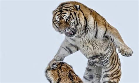 beleza da natureza fotos e imagens 33 fotos que a capturam a beleza brutal dos animais na