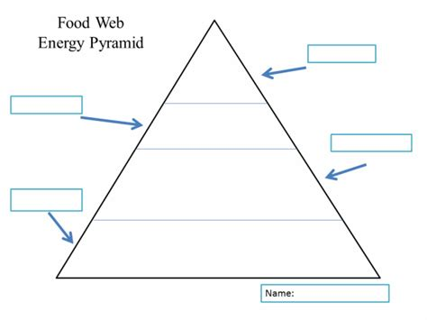 Food Chain Template Cards by Food Web Energy Pyramid Template Ei Classroom