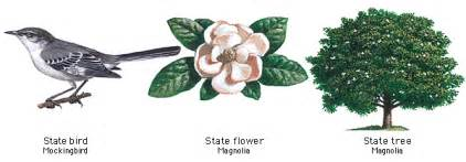 Apple Blossom State Flower - oes tours the usa mississippi