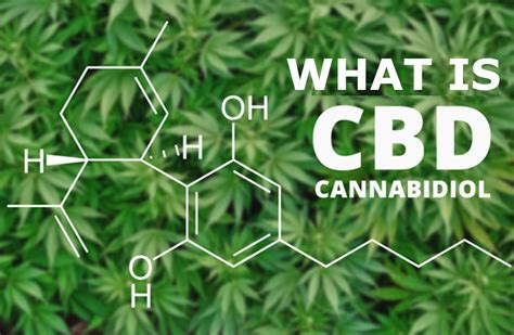 Does Cbd Help Detox Your by What Is Cbd Or Cannabidiol