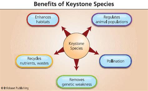 new green business ideas keystone species