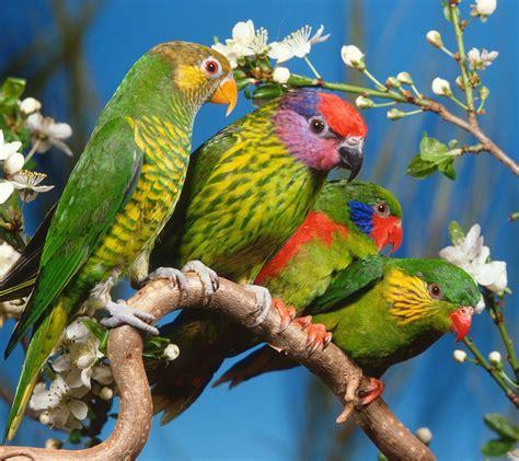 flower shop beautiful flowers parrots birds