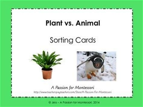 6 best images of zoo animal sorting card printables zoo plant vs animal sorting cards plants sorting and cards
