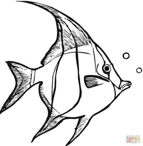 angelfish 3 coloring page free printable coloring pages