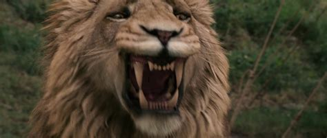aslan the from narnia chronicles of narnia aslan quotes quotesgram