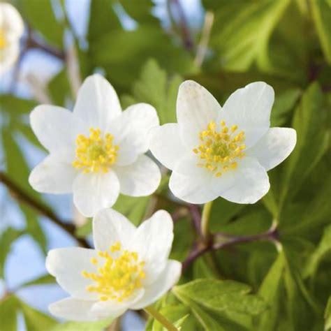 Joli Nom De Fleur by Fleur Qui Fleurit Liste Ooreka
