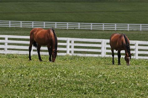 horse outside sport horses boost kentucky s equine economy