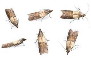 kleine weiße fliegen im garten k 252 che kleine fliegen k 252 che kleine fliegen k 252 che kleine