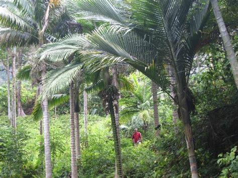 Hiking Picture Of Hoomaluhia Botanical Gardens Kaneohe Hoomaluhia Botanical Gardens