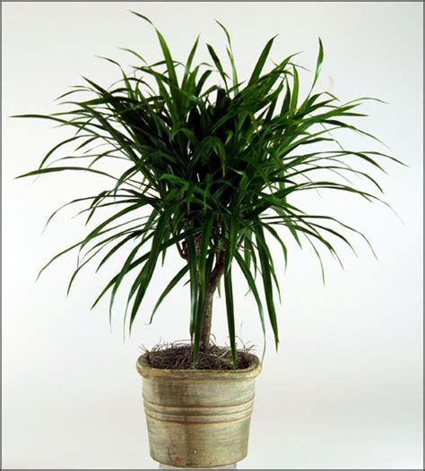 Best Plants For Low Light | tropical plants low light office furniture
