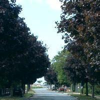 Schöne Bäume Für Garten by Gemeinde Haringsee Haringsee