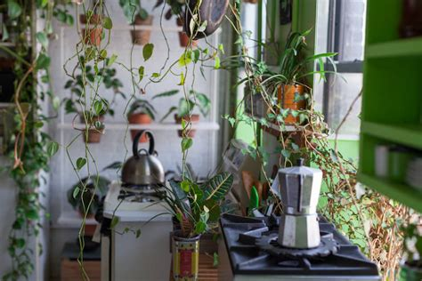 Jungle Kitchen by Tips For Filling Your Apartment With Plants Well