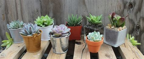 Succulent Containers For Sale by 646 Best Succulents For Sale Images On Pinterest