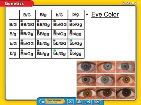 inheritance pattern eye color ch 5 2 understanding inheritance k