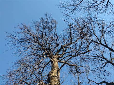 x tree n5x tree talkandroid