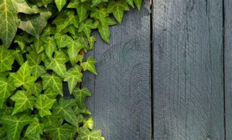 piante da veranda quali piante ricanti scegliere per la veranda wineverse