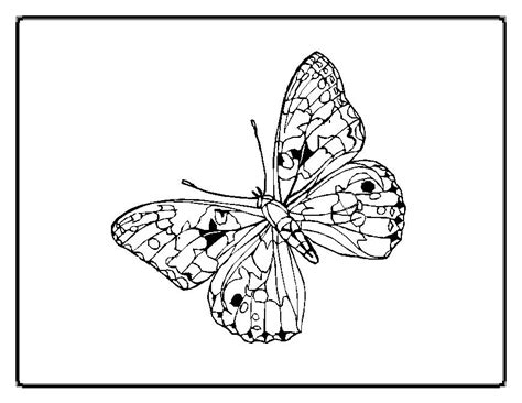 coloring page of painted lady butterfly painted lady butterfly coloring page az coloring pages