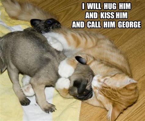 pug pun names pug meme pun lol pug memes lol cats and toys