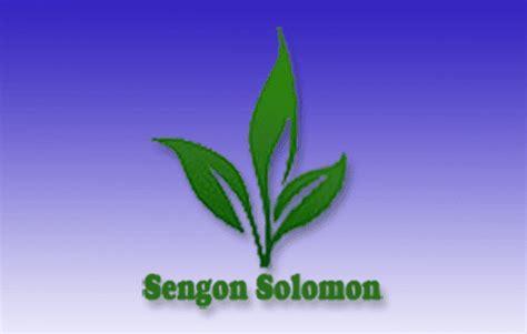 Jual Bibit Sengon Solomon Kultur Jaringan laurencius