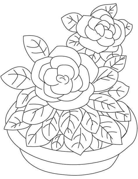 Gardenia Color Gardenia Flowers Coloring Pages
