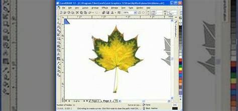design certificate using corel draw how to design scroll saw patterns with corel draw