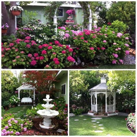 hydrangeas great garden plants blog