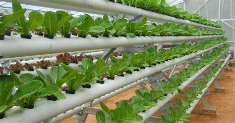 solusi berkebun  tanah agrikultur