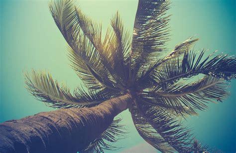 California Palm Wall Mural   MuralsWallpaper.co.uk