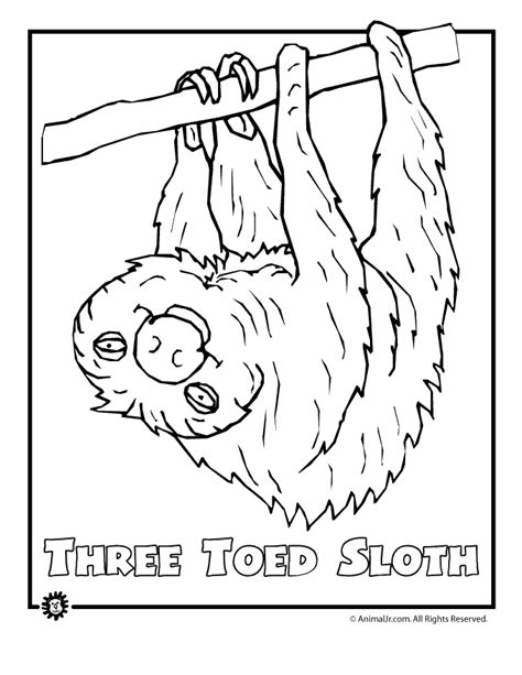 coloring pages of dangerous animals endangered rainforest sloth animal jr